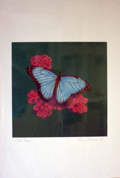 Blue Morpho Butterfly, giclee print front