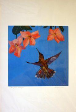 Ruby Topaz Hummingbird, giclee print front